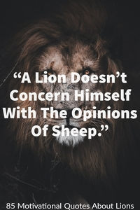 """""""A Lion does not lose sleep over the opinions of a sheep."""""""