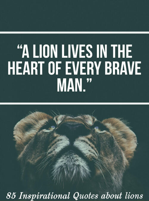 85 Inspirations Quotes About Lions (Lion Quotes For Motivation)